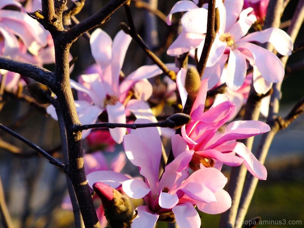 Spring #15
