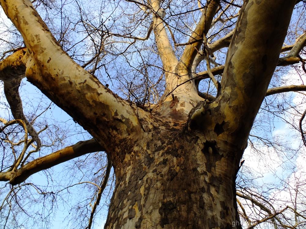 Sagacious of the wood