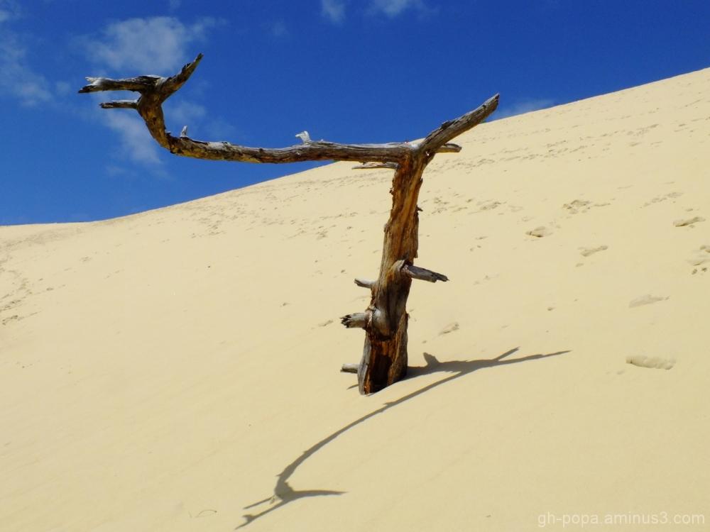 Alone in the desert