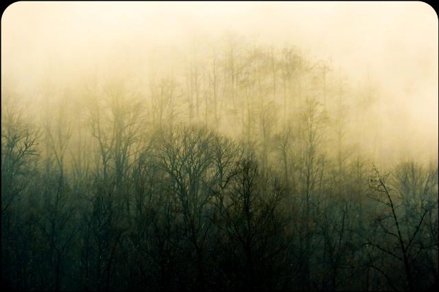 جتگل و مه