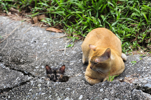 cat kitten guard