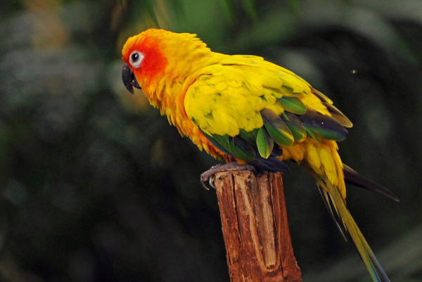 colourful bird sun conure