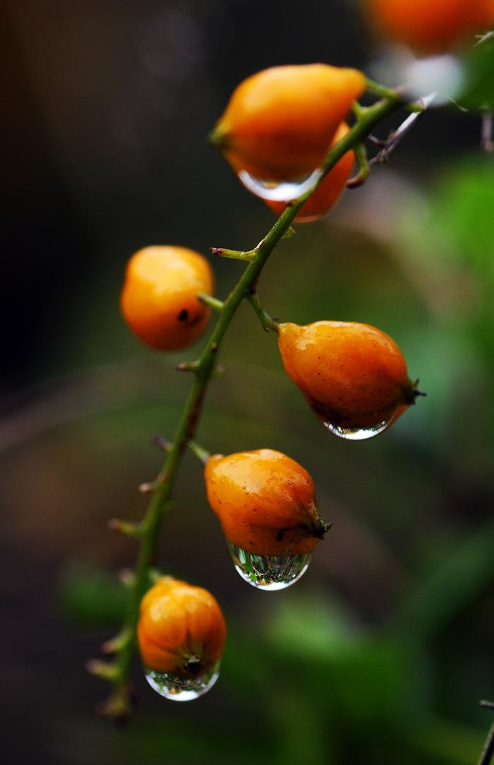 rain drops fruit