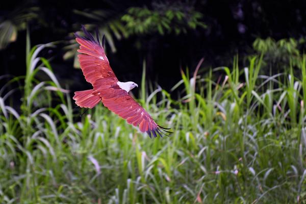 eagle glide bird-park