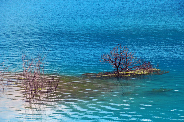 Lijiang lake islet blue waters tree