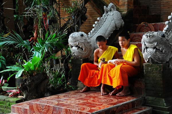 boys monks puppies temple Thailand