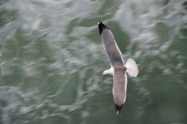Gliding Above the Waves