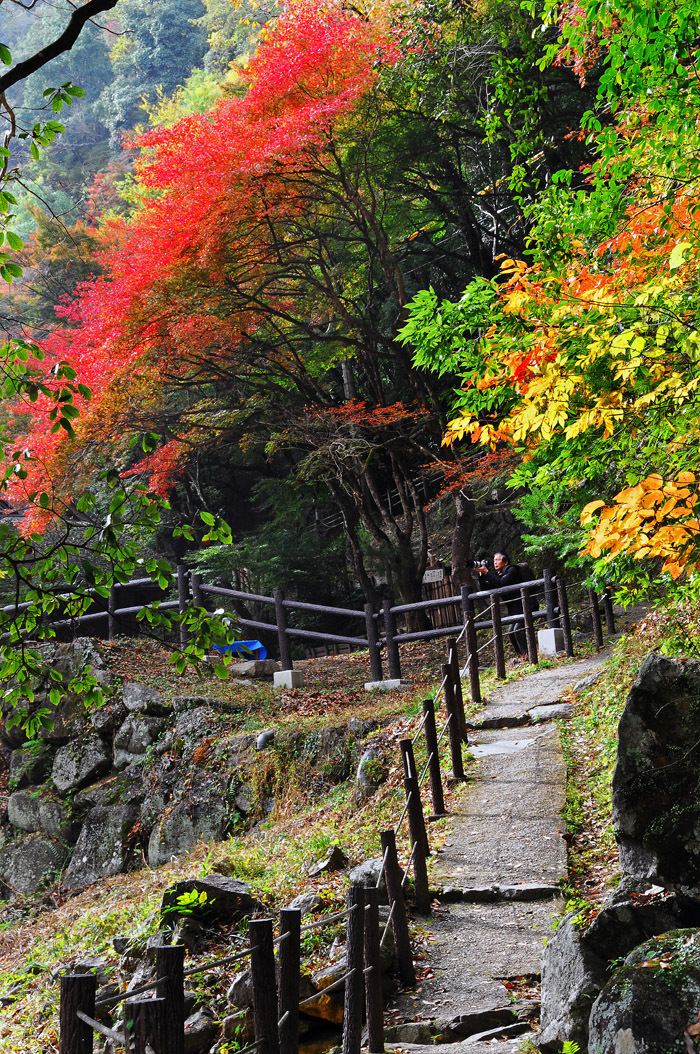 Autumn - Korankei Ravine, Japan