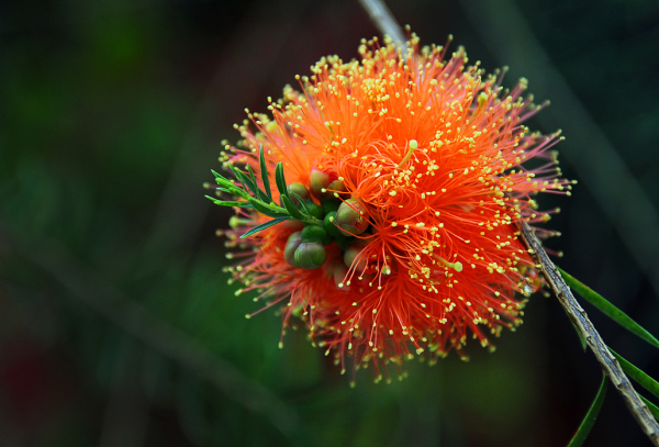 A Spiky Flower