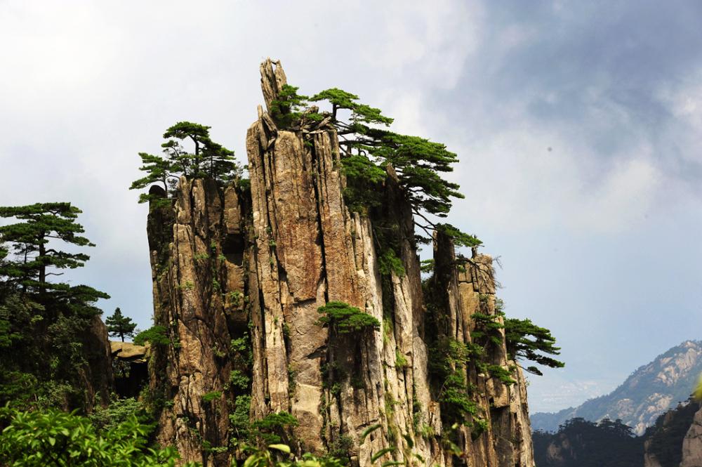 Pines of Huangshan #3