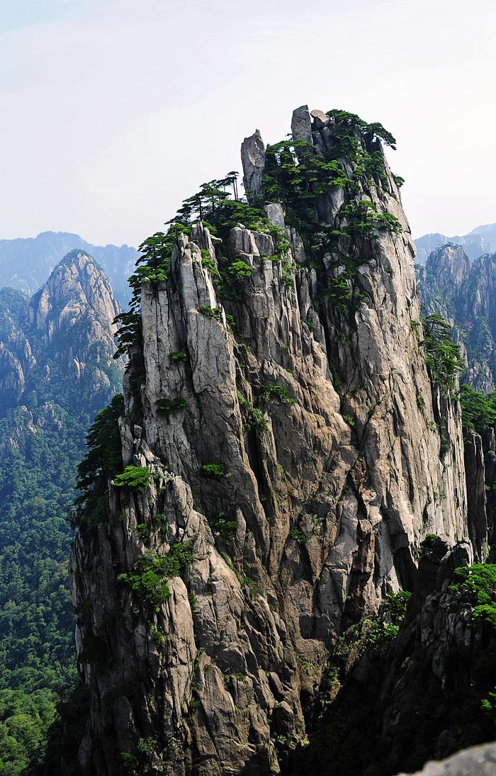 Pines of Huangshan #5