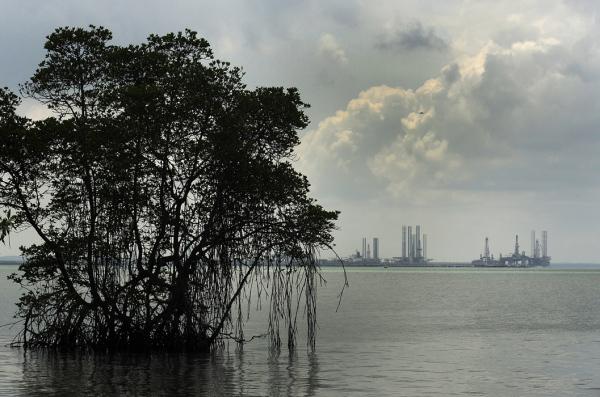 Mangrove at High Tide - Ubin Island