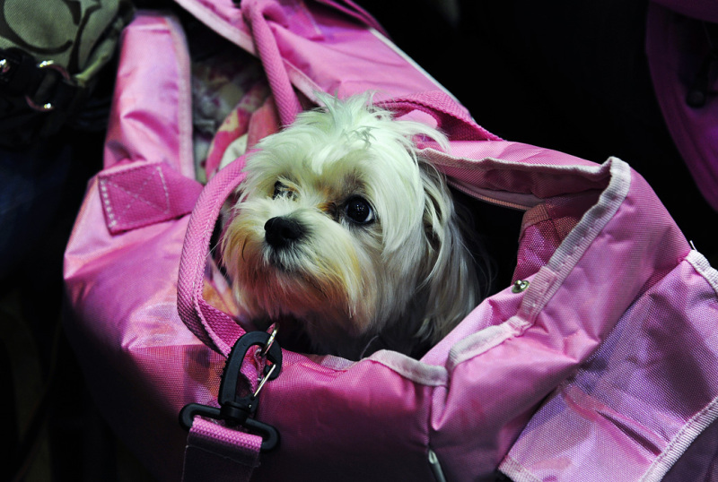 Doggie in a Bag