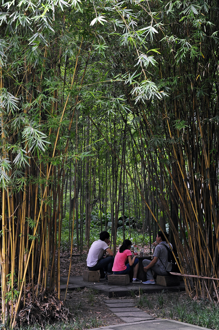 In a Bamboo Grove