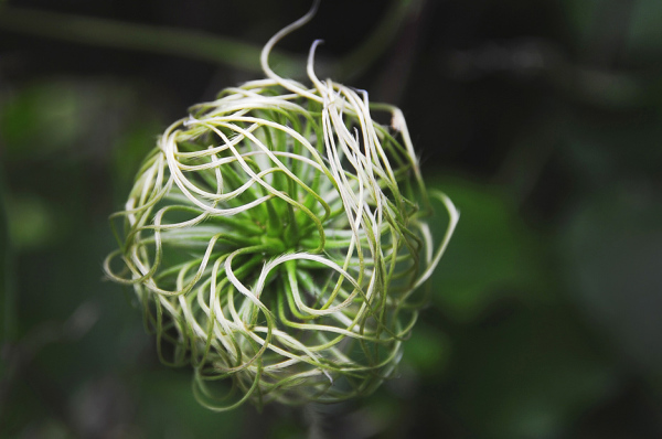 Bird Nest Flower