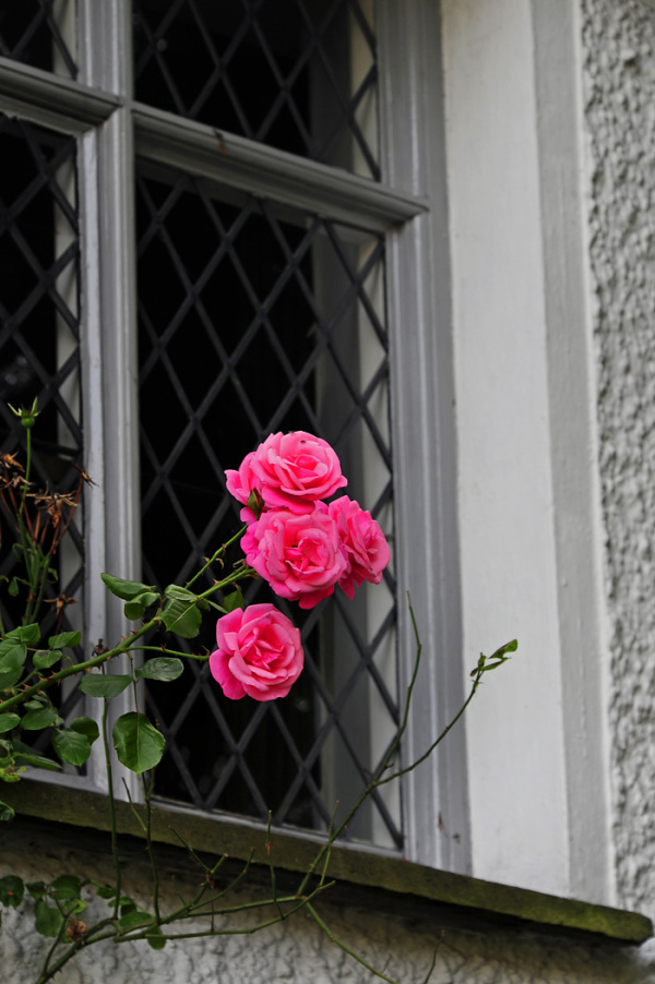 Roses at a Window