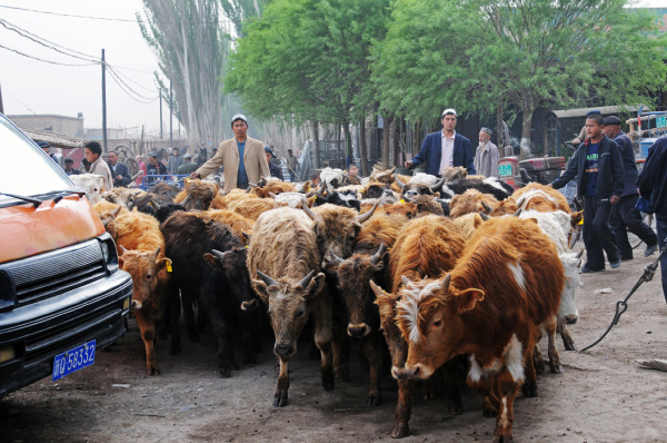 Driving Cattle to Market