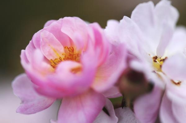 A Floral Pair