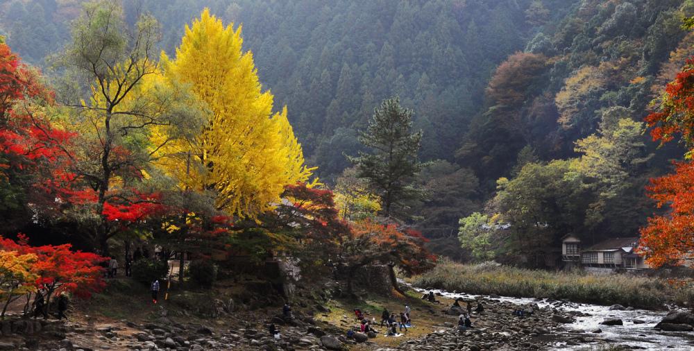 Autumn in the Kurankei Ravine, Japan
