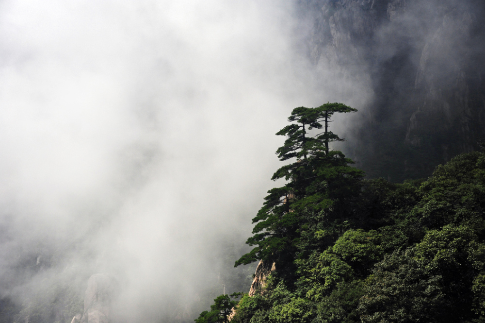 The Pines of Huangshan