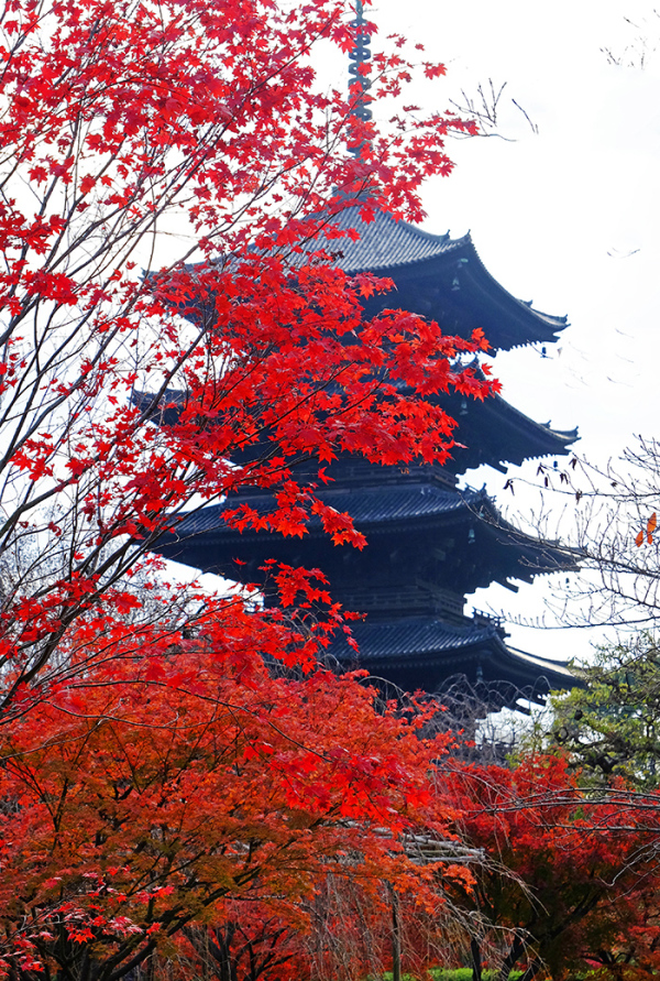 To-ji Temple Pagoda, Kyoto
