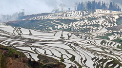 Terraced Rice Fields in Yuan Yang