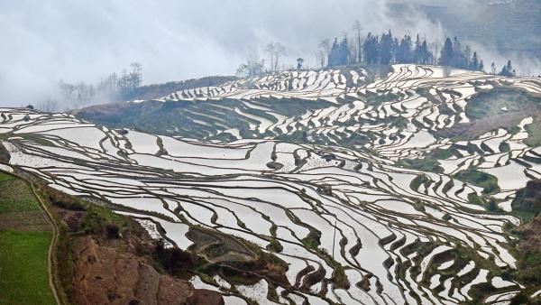 Terraced Rice Fields in Yuan Yang