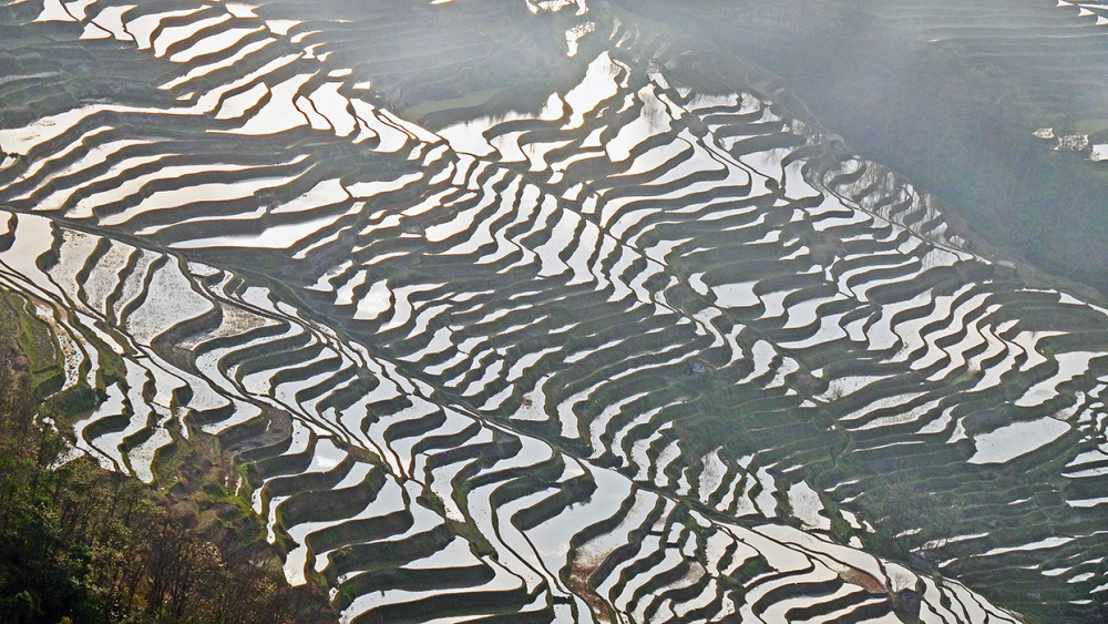 Terrace Rice Fields in Yuan Yang