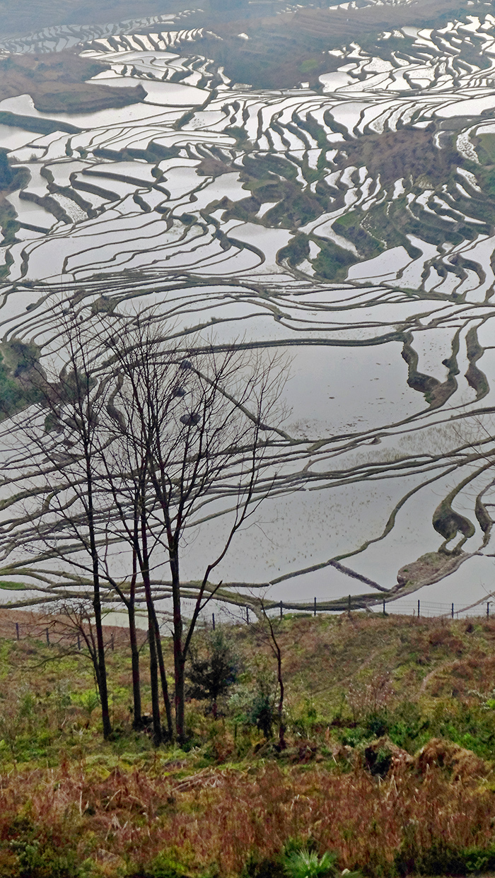 Rice Terraces in Yunnan (China)