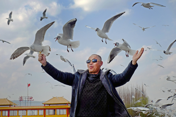 Surrounded by Seagulls