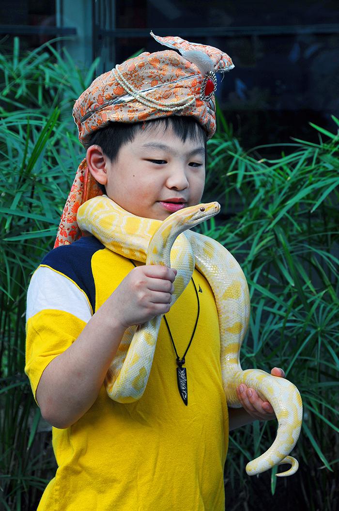 Snake Charmer's Apprentice (Singapore)