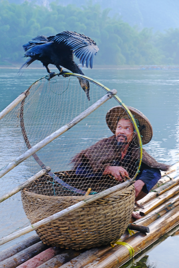 Fisherman and his Cormorant