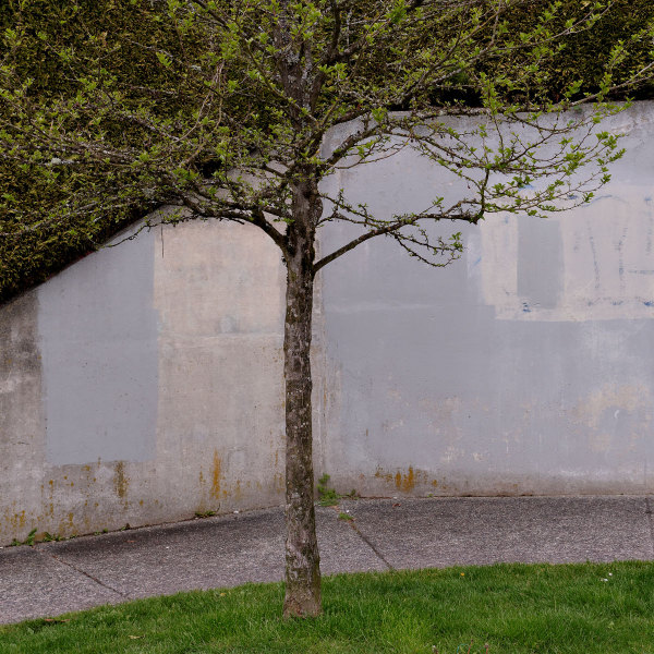 Tree in a Corner
