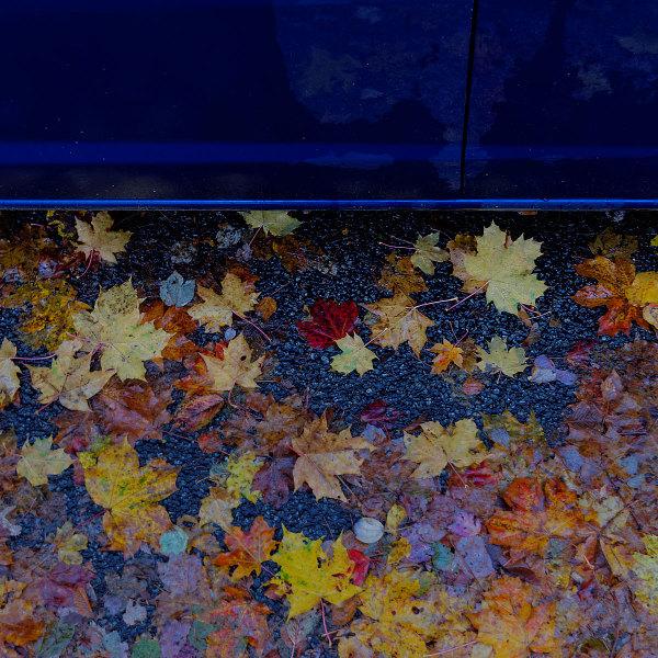 My Car, Fall, Morning