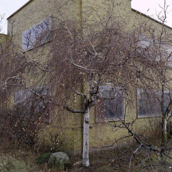 Last Lost Tree