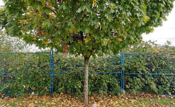 Guard Tree