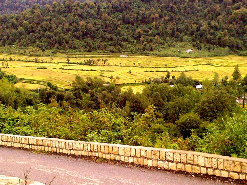 Talesh nature