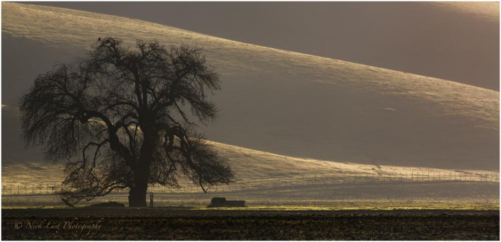 patterns nature oak tree fog mist