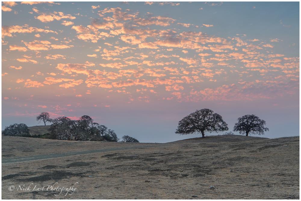 susnet, oak trees, central california