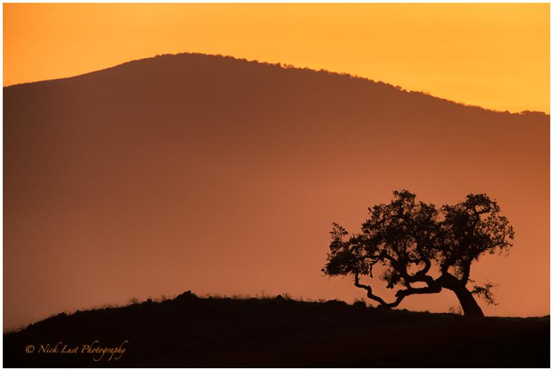sunset, san benito, ca, oak trees