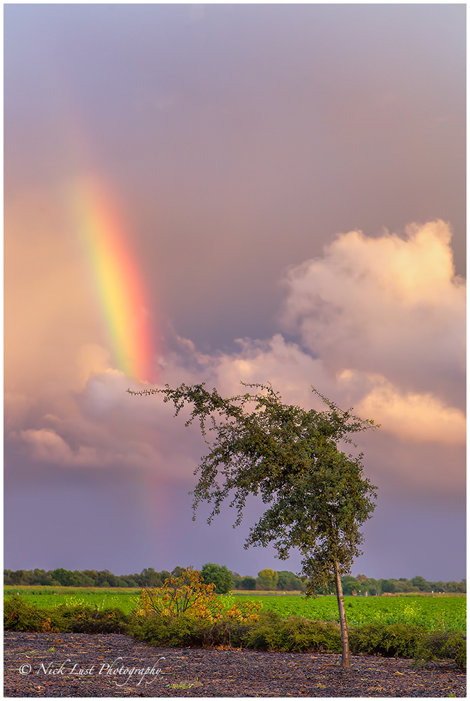 rainbow, San Benito, California, willow tree