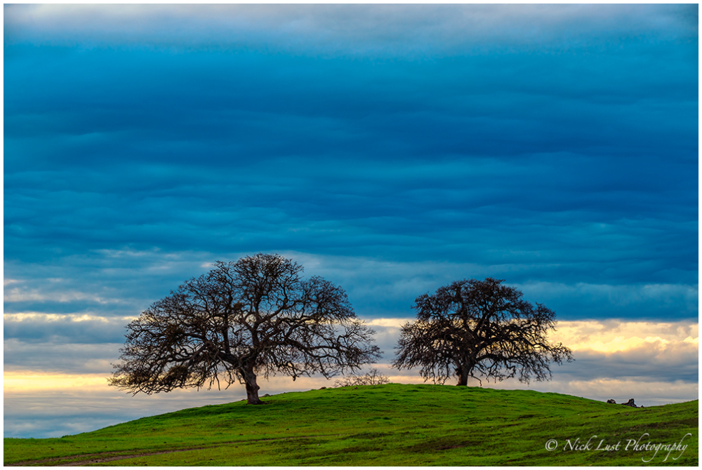 sunset, san benito, ca, oak trees