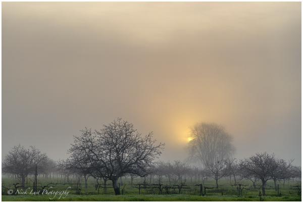 san benito county, california, fog, walnut orchard