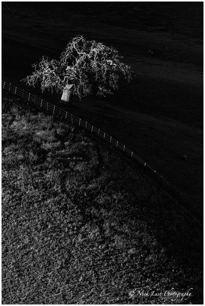susnet, oak, central california, black and white