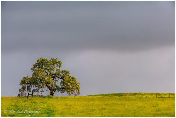 lone oak, sunrise, simplicity