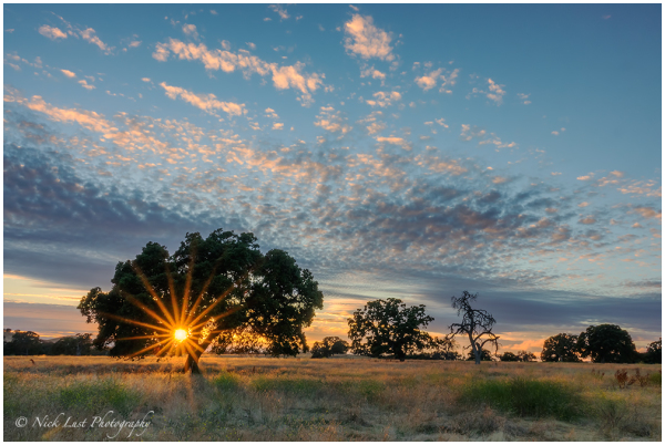 sunset behind oak tree in central california