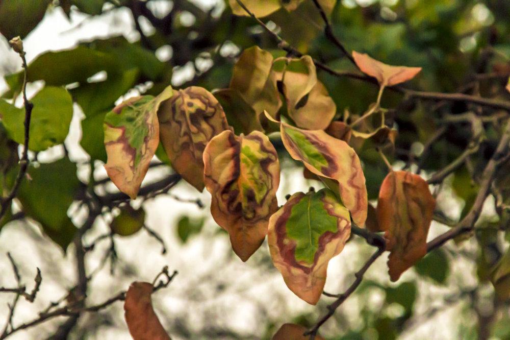 Fall...,2