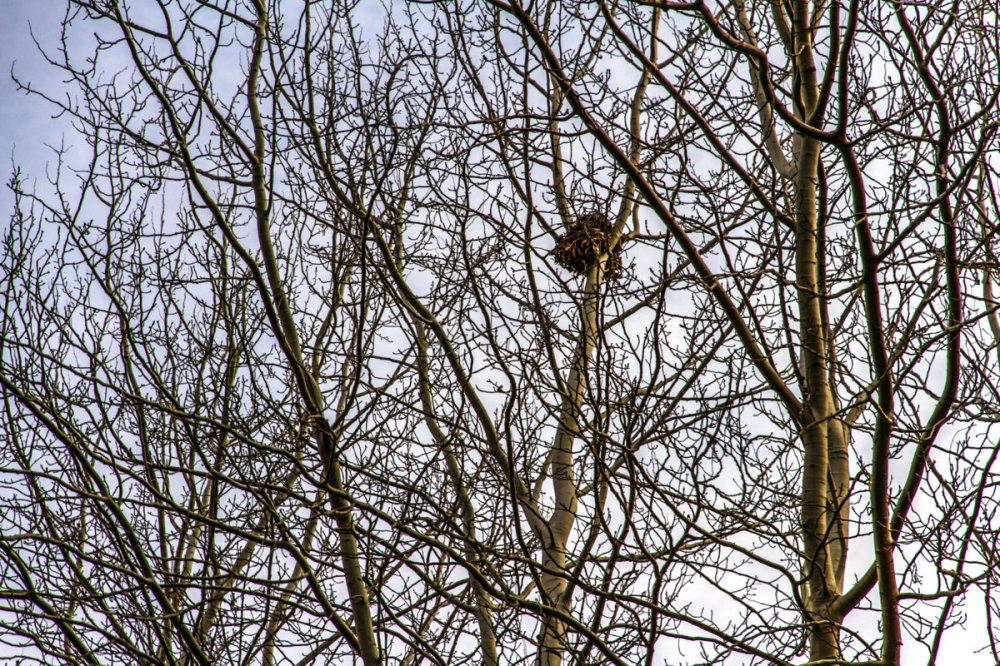 Nest , 2