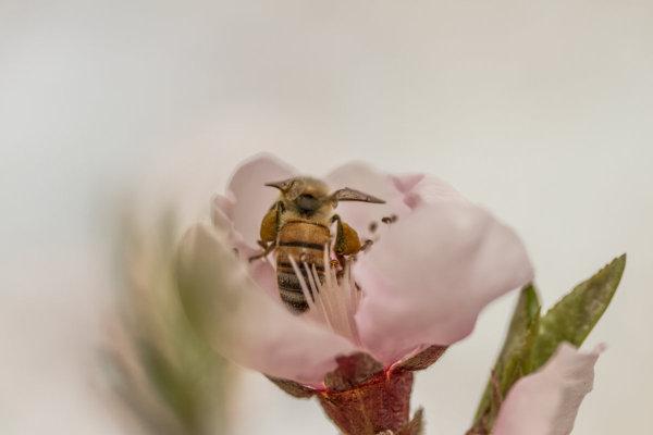 Bloom  ,4