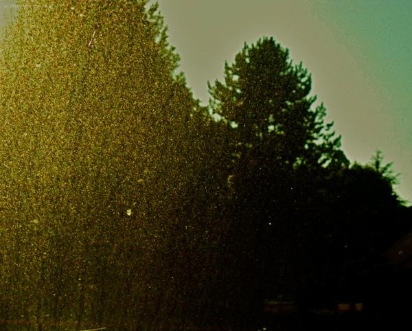Sparkling dusty screen